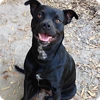 Adopt A Pet :: Annie - Groveland, FL