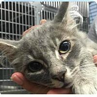 Adopt A Pet :: Cain - Springdale, AR