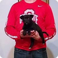 Adopt A Pet :: Calvin - South Euclid, OH