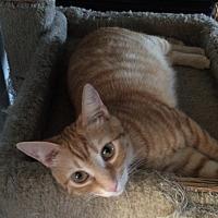 Adopt A Pet :: Matilda - San Ysidro, CA