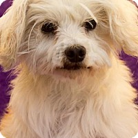 Adopt A Pet :: Bianca - Imperial Beach, CA