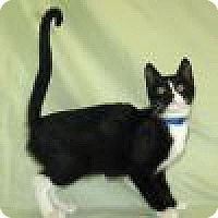 Adopt A Pet :: Breanne - Powell, OH