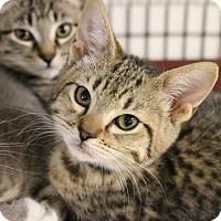 Adopt A Pet :: Tilda - Medina, OH