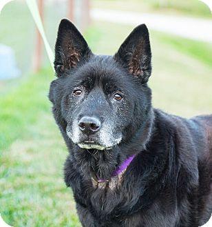 Hooch-REDUCED FEE | Adopted Dog | Seville, OH | Border ...