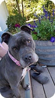 American Pit Bull Terrier Mix Dog for adoption in McKenna, Washington - Pebbles