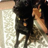 Adopt A Pet :: Jacob - Courtesy Listing - Cleveland, OH
