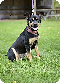 Shepherd (Unknown Type) Mix Dog for adoption in Midland, Michigan - Nalina