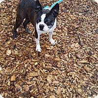 Adopt A Pet :: Katrina - Seattle, WA