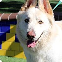 German Shepherd Dog Dog for adoption in Irvine, California - Dougan
