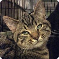 Adopt A Pet :: Snoppy - Breinigsville, PA