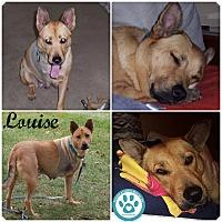 Adopt A Pet :: Louise - Kimberton, PA