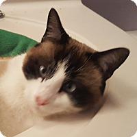 Adopt A Pet :: Gussie - Bridgeton, MO