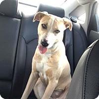 Adopt A Pet :: Heaven - Maquoketa, IA