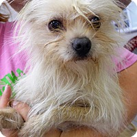 Adopt A Pet :: Cotton - Manning, SC