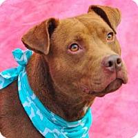 Adopt A Pet :: CALEB - Louisville, KY