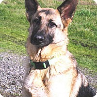 Adopt A Pet :: Lady - Pleasant Grove, CA