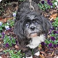 Adopt A Pet :: Millie - Atlanta, GA