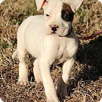 Adopt A Pet :: Molly - Washington, DC