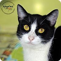 Adopt A Pet :: Mercury - Lyons, NY