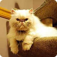 Adopt A Pet :: Hermes - Farmingdale, NY