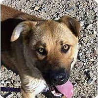 Adopt A Pet :: Tucker - YERINGTON, NV