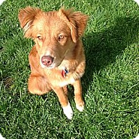 Adopt A Pet :: Nadia - Cheshire, CT