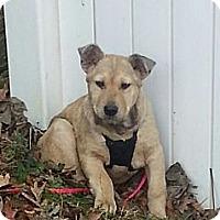 Adopt A Pet :: Colin - Russellville, KY