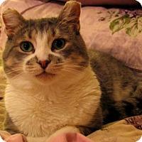 Adopt A Pet :: Ranger - *FIV* - Richmond Hill, ON