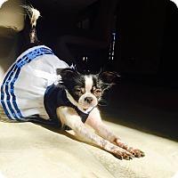 Adopt A Pet :: Ally - Windermere, FL