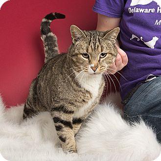 Kitten adoption wilmington nc : Ebay coins canada questions
