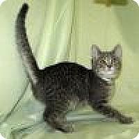 Adopt A Pet :: Kazam - Powell, OH