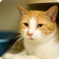 Adopt A Pet :: *Sherbert* - Philadelphia, PA
