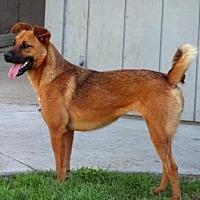 Adopt A Pet :: Doodle - Lathrop, CA