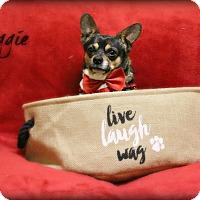 Adopt A Pet :: Reggie - Clarksville, TN