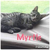 Adopt A Pet :: Myrtle - Arlington/Ft Worth, TX