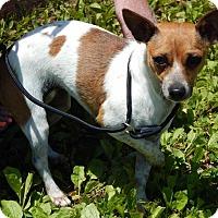Adopt A Pet :: Tammy(9 lb) New Pics & Video - Burlington, VT