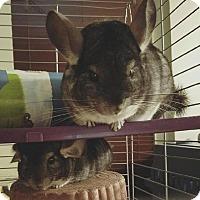 Adopt A Pet :: Muffy and Buffy - Aurora, IL