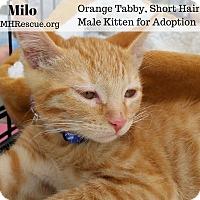 Adopt A Pet :: Milo - Temecula, CA