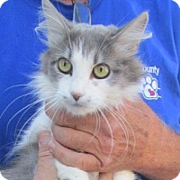 Adopt A Pet :: Elizabeth - Germantown, MD