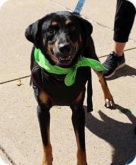 Collie/Hound (Unknown Type) Mix Dog for adoption in Centreville, Virginia - Mackenzie - Adoption Pending