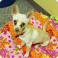 Adopt A Pet :: Ruby - East Hartford, CT