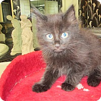 Adopt A Pet :: Deena - Jeffersonville, IN