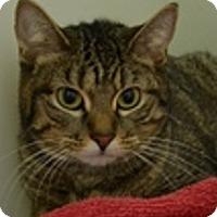 Adopt A Pet :: Sparkle-LITTLE SWEETHEART - Naperville, IL