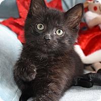 Adopt A Pet :: Rudolph - Bristol, CT