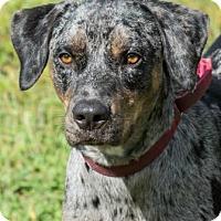 Adopt A Pet :: Max 619 - Loxahatchee, FL