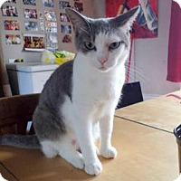 Adopt A Pet :: BLUEBERRY - THORNHILL, ON