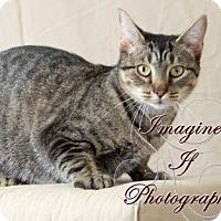 Adopt A Pet :: Peaches - Oklahoma City, OK