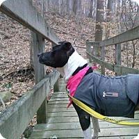 Adopt A Pet :: RJ - Akron, OH
