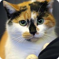 Adopt A Pet :: Cassidy - Bedford, VA