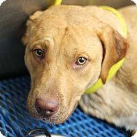 Adopt A Pet :: Davy Jones - Covington, LA